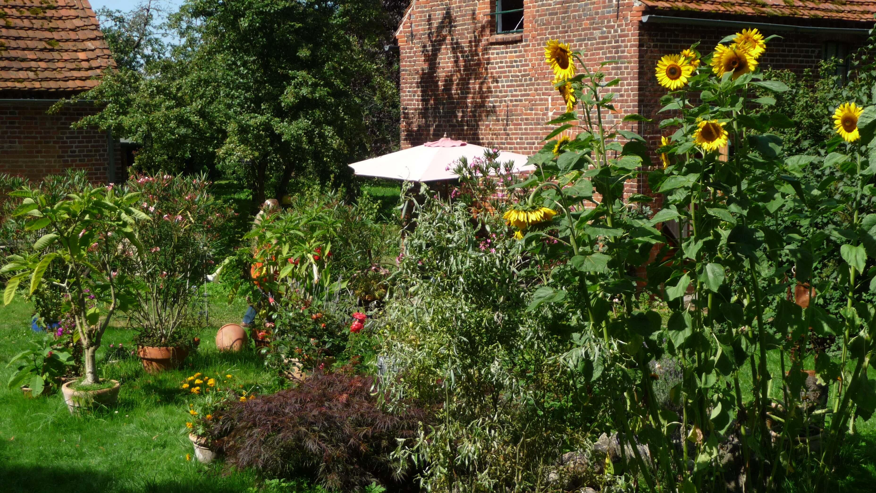 Blumenmeer im Sommer. | Ferienwohnungen Müritz - Alte Ziegelei
