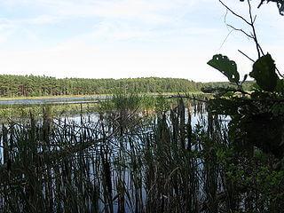 Mühlensee im Sommer. | Ferienwohnungen Müritz - Alte Ziegelei