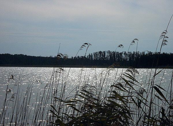 See im Müritz-Nationalpark. | Ferienwohnungen Müritz - Alte Ziegelei