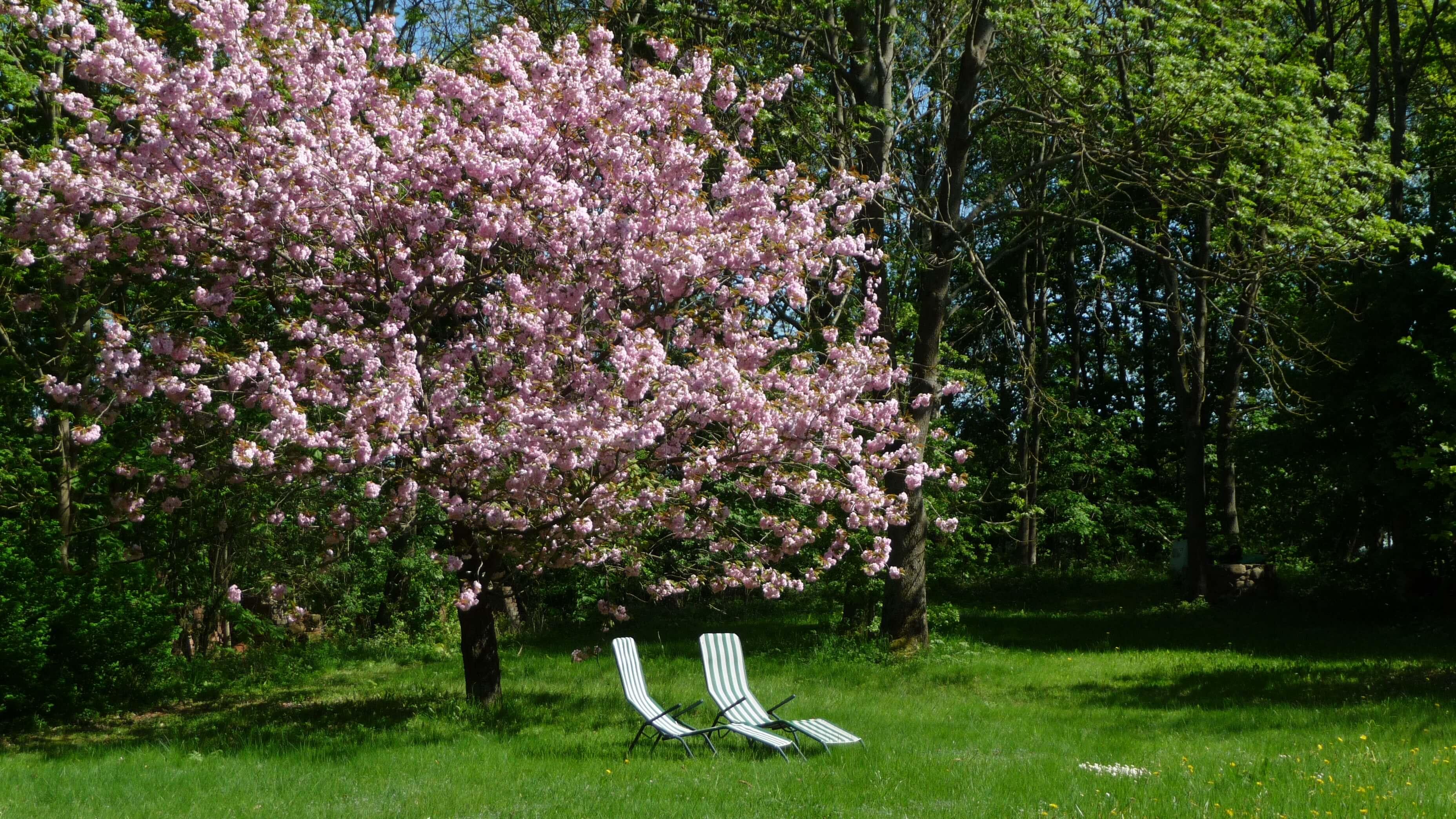 Liegewiese im Frühling. | Ferienwohnungen Müritz - Alte Ziegelei