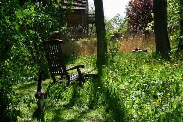 Liegestuhl am Teich mit Kater Max. | Ferienwohnungen Müritz - Alte Ziegelei