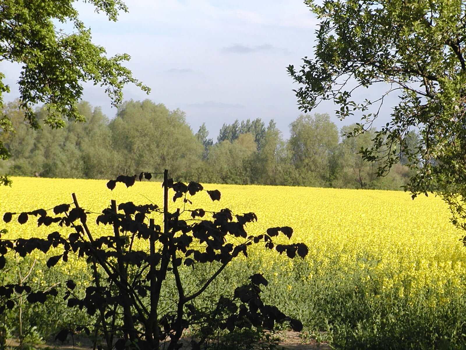 Ausblick im Mai. | Ferienwohnungen Müritz - Alte Ziegelei
