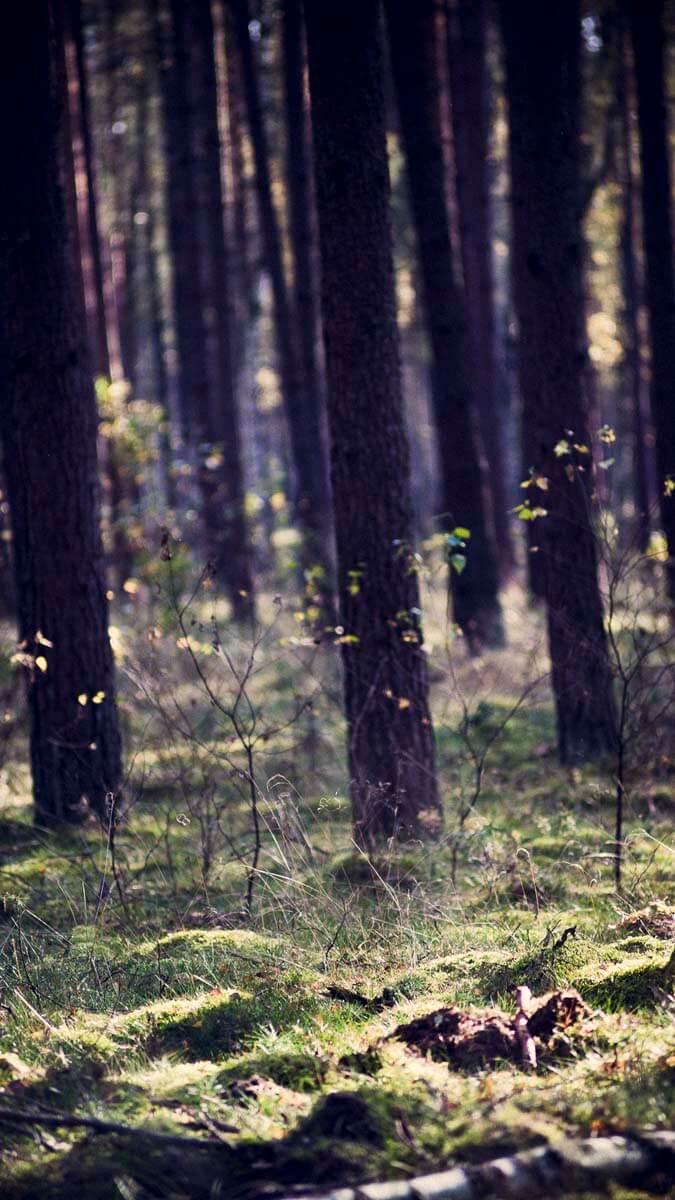 Friedliche Atmosphäre im Wittstocker Forst. | Ferienwohnungen Müritz - Alte Ziegelei