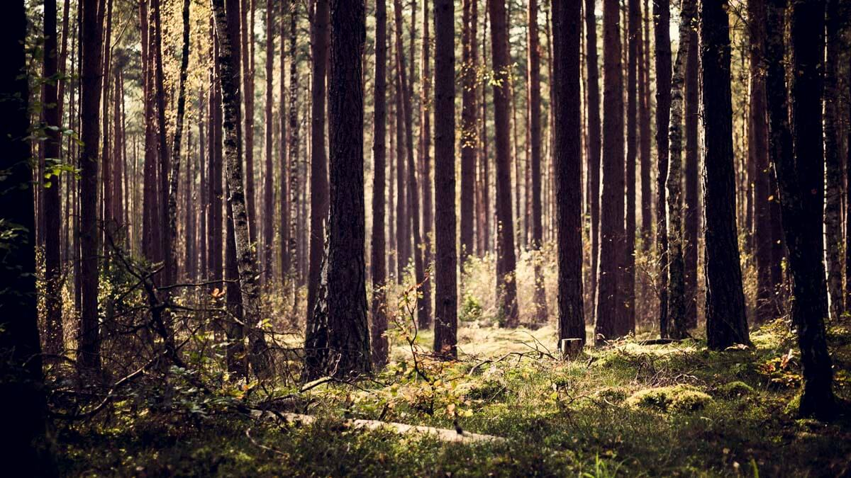 Spazieren im Wittstocker Forst. | Ferienwohnungen Müritz - Alte Ziegelei