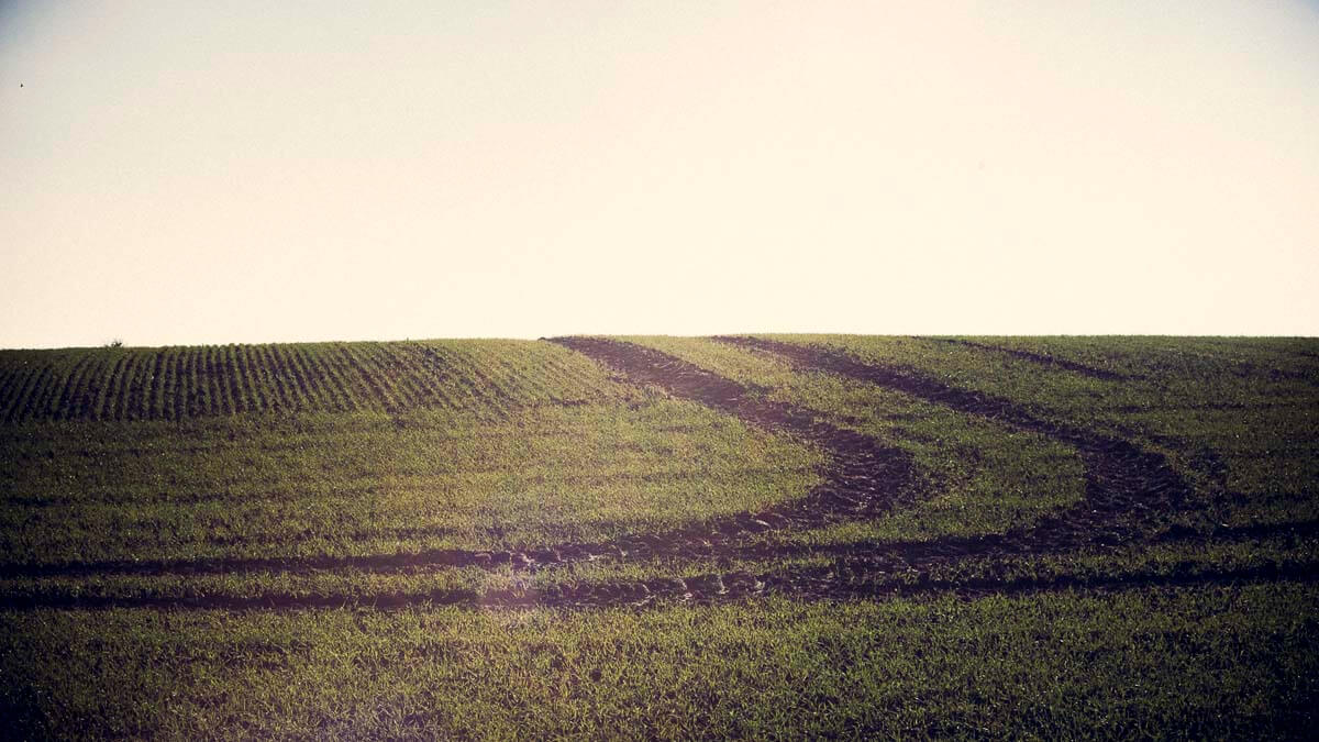 Feld in der Umgebung. | Ferienwohnungen Müritz - Alte Ziegelei