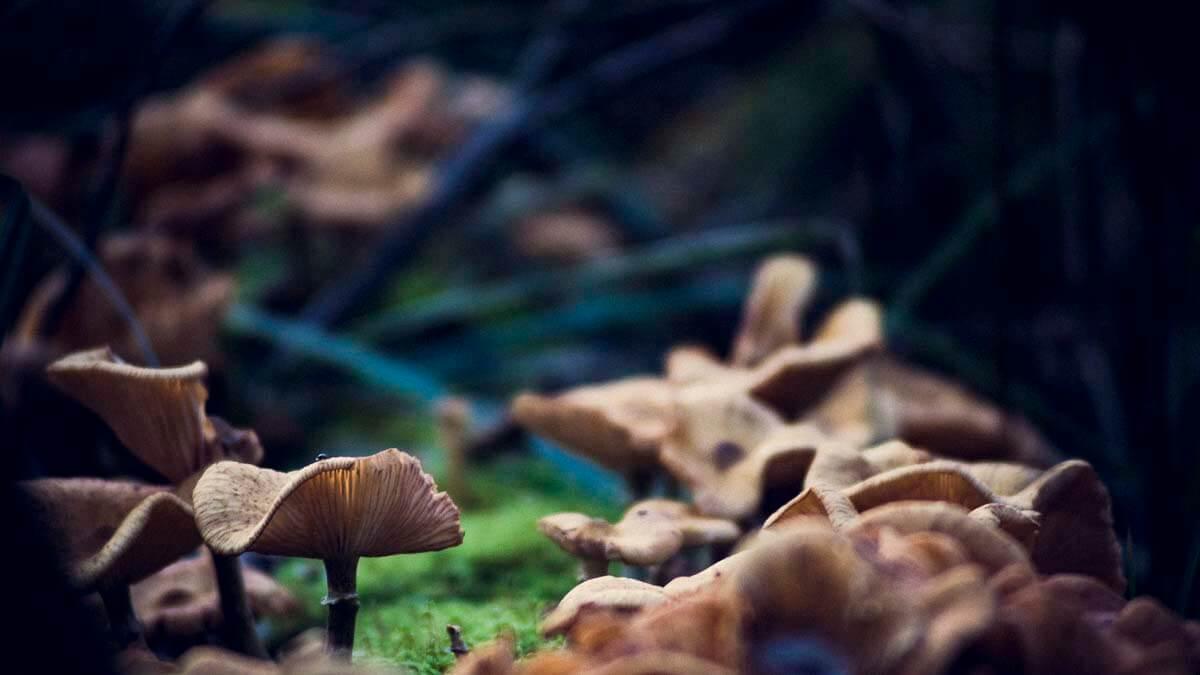 Pilze im Wittstocker Forst. | Ferienwohnungen Müritz - Alte Ziegelei